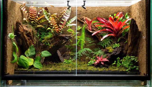 75 gallon terrarium