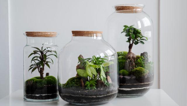 closed terrarium plants