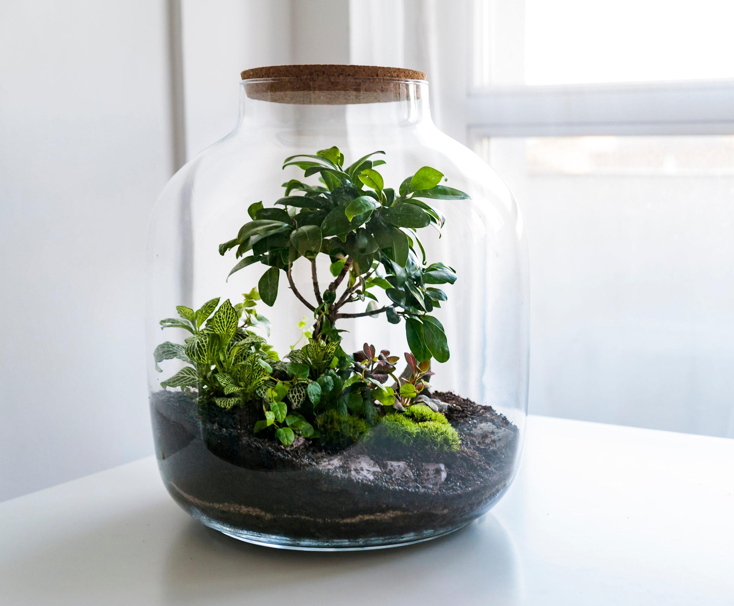 self contained terrarium