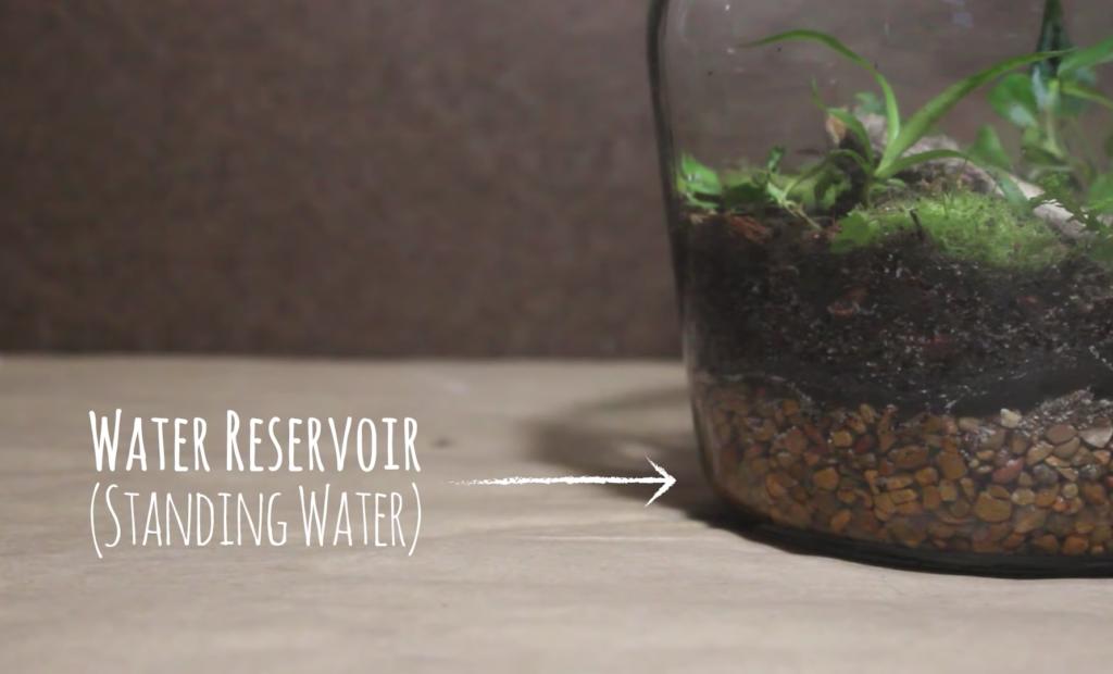water for terrarium