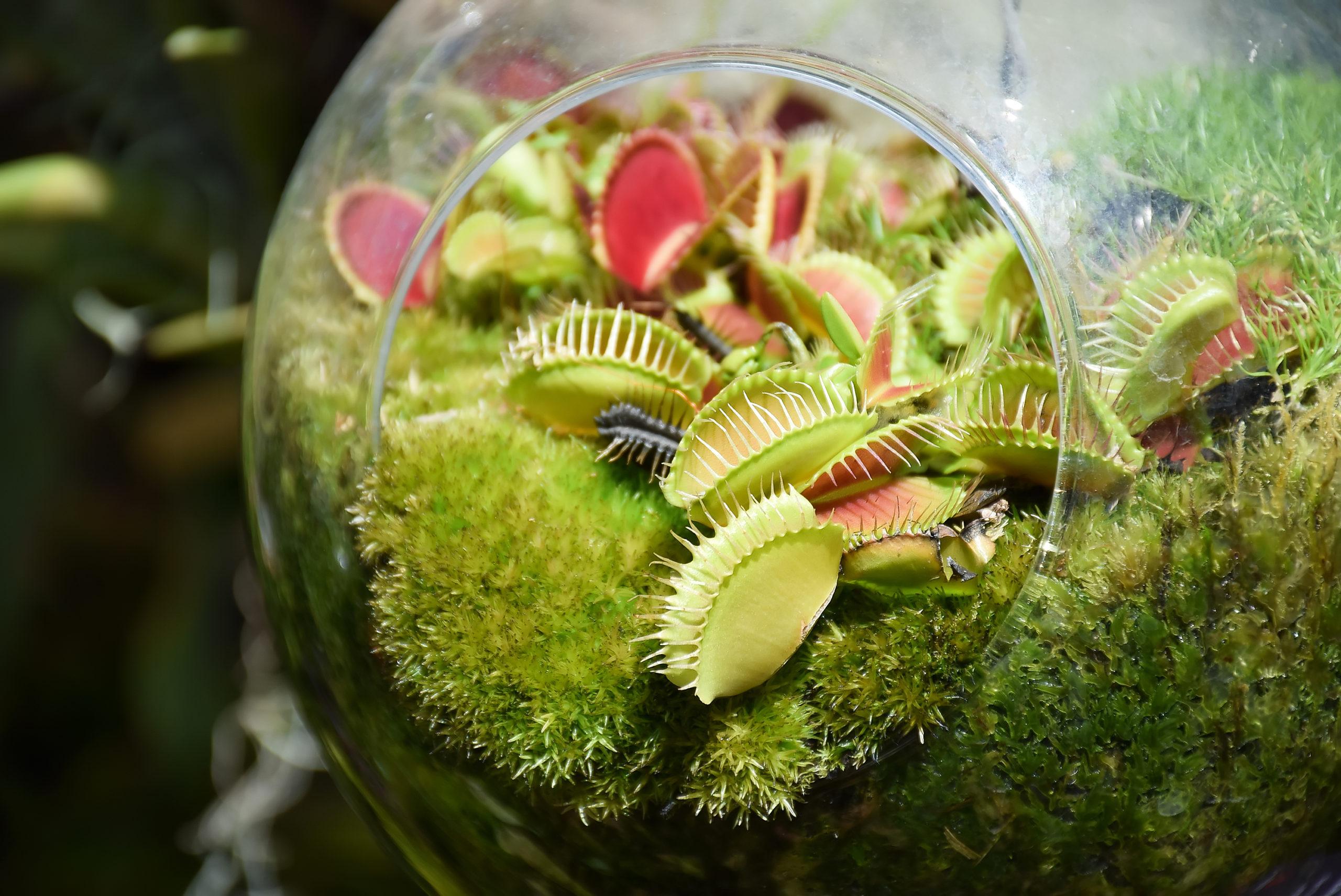 pitcher plant bowl