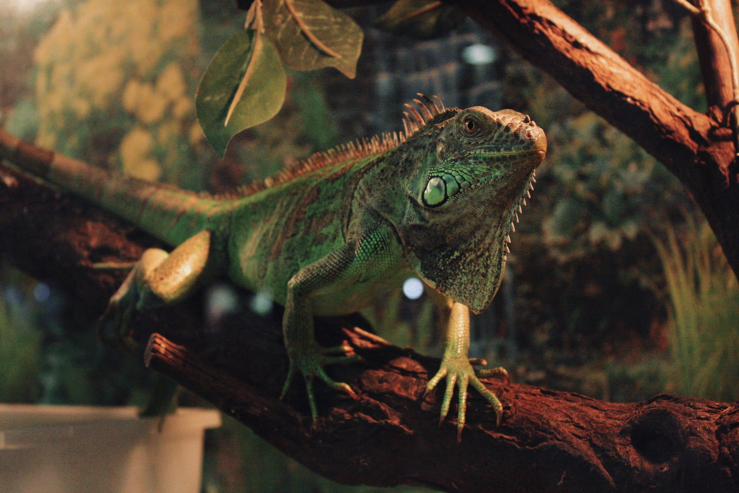 Reptile terrariums for sale