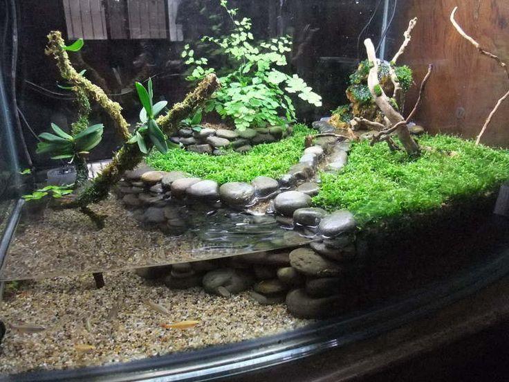 box turtle terrarium