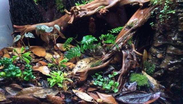 dart frog terrarium