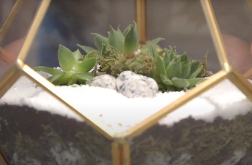 succulent glass terrarium - closer