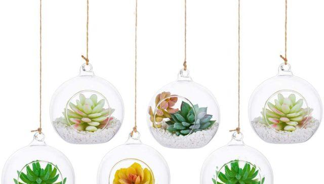 hanging terrarium kits