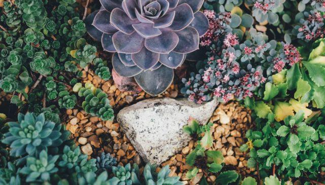 Terrarium Plants for Sales