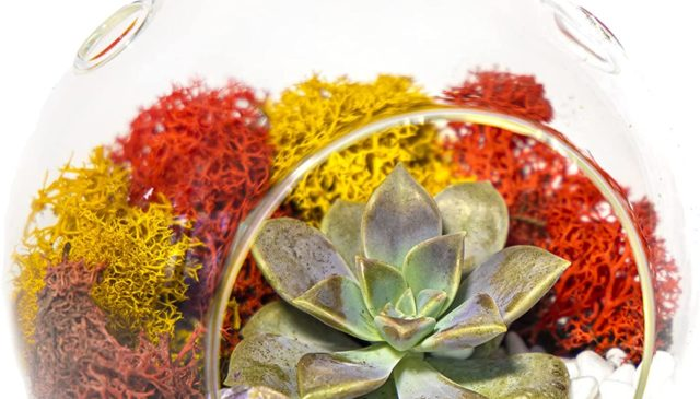 succulent terrarium kits